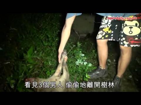 兩小野豬伏屍公園 冷血獵豬男被捕