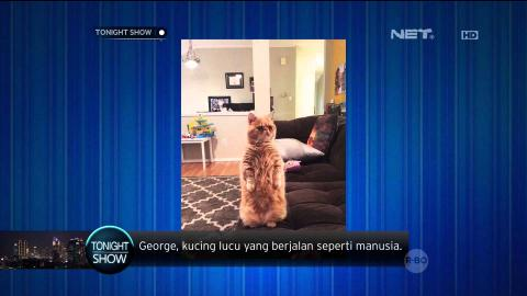 George, Kucing Lucu yang Berjalan Seperti Manusia - Tonight's Headline