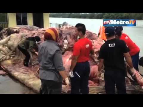 Paus mati makan sisa makanan terbuang