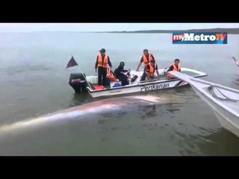 Bangkai paus dibedah siasat