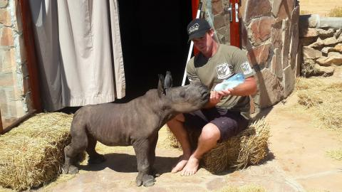 Adorable Newborn Rhino Rescued After Being Abandoned By Its Mother